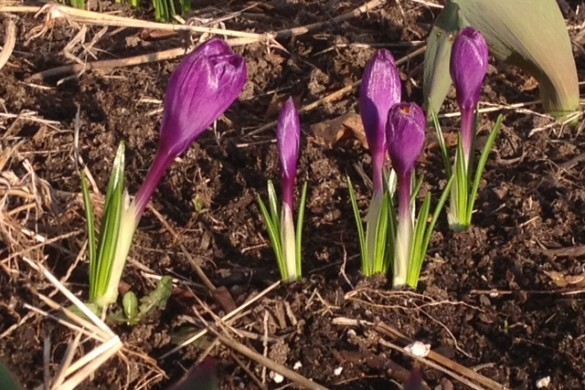 Signs of spring 2012